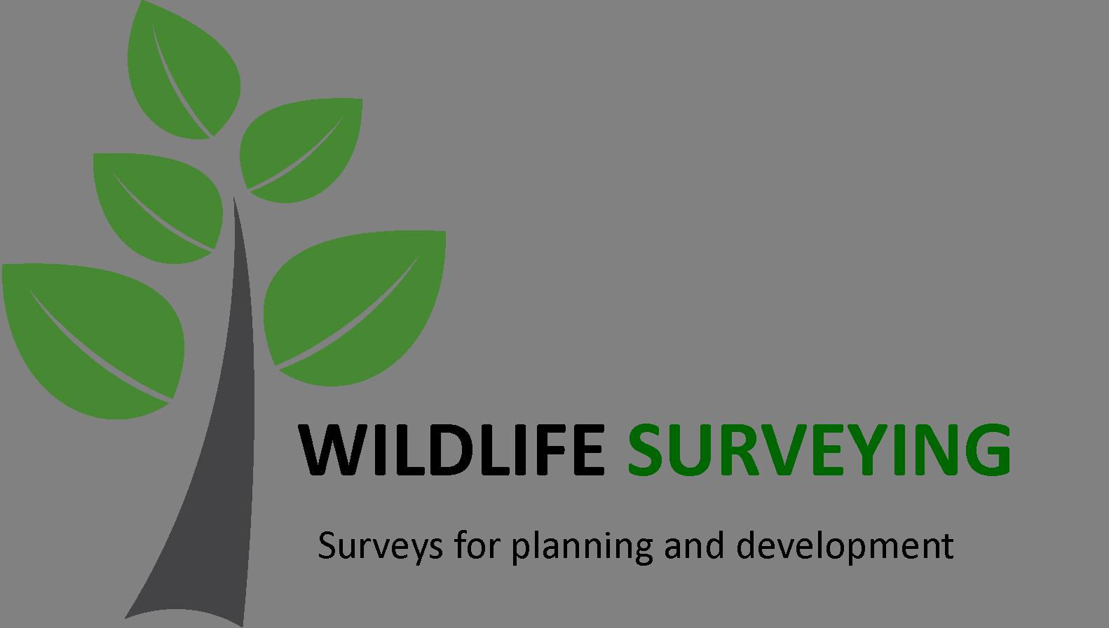 Wildlife Surveys for Planning and Development