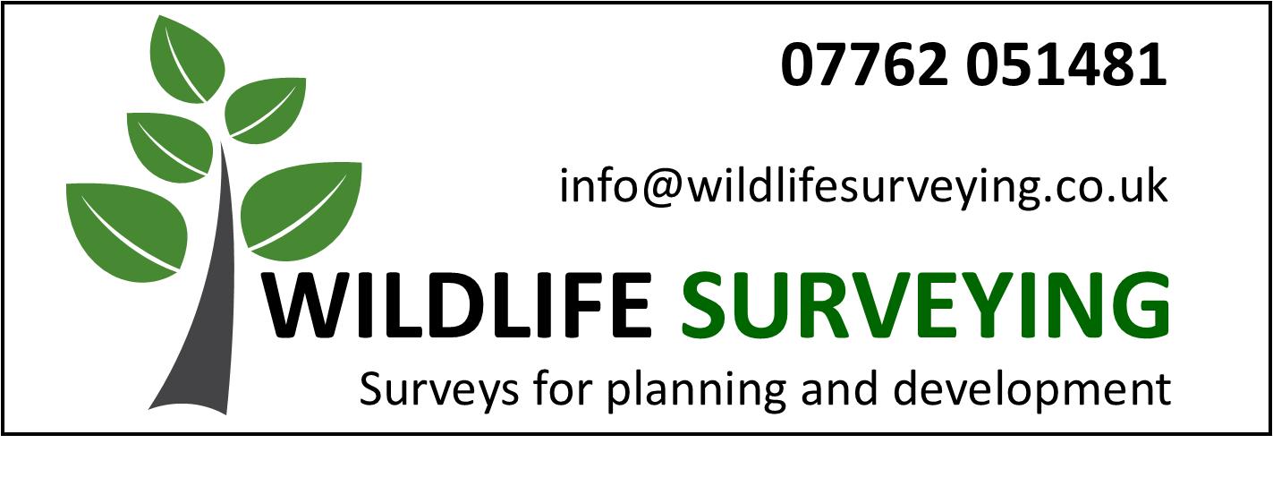 wildlife surveying, devon ,exeter, bat surveys, planning permission, wildlife, bat survey