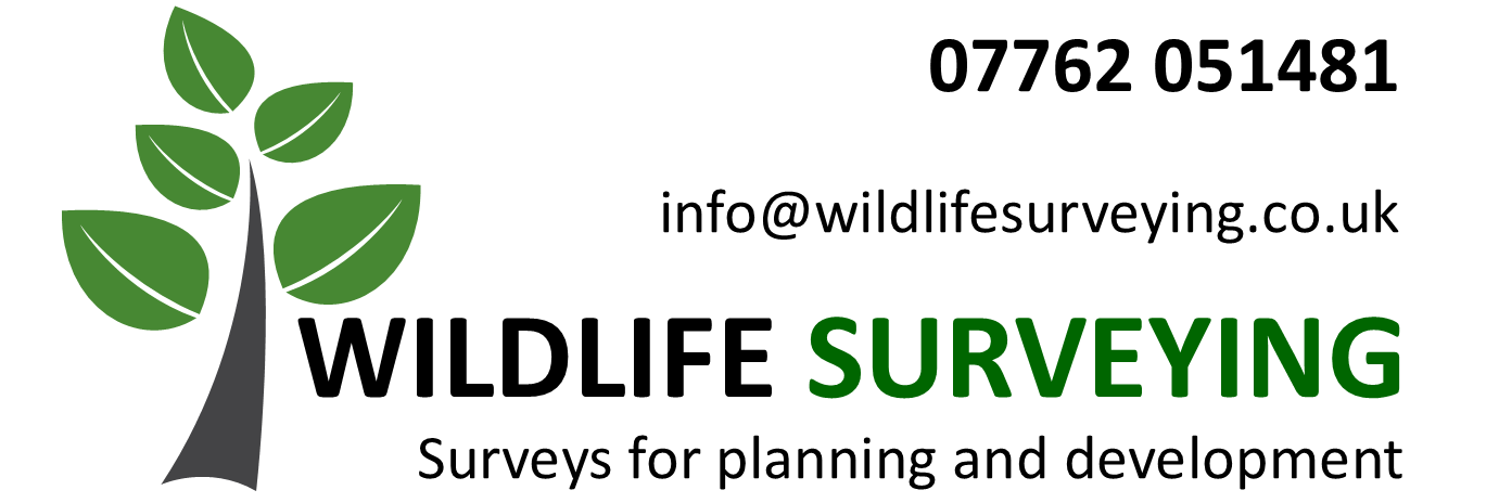 Wildlife Surveys for Planning and Development